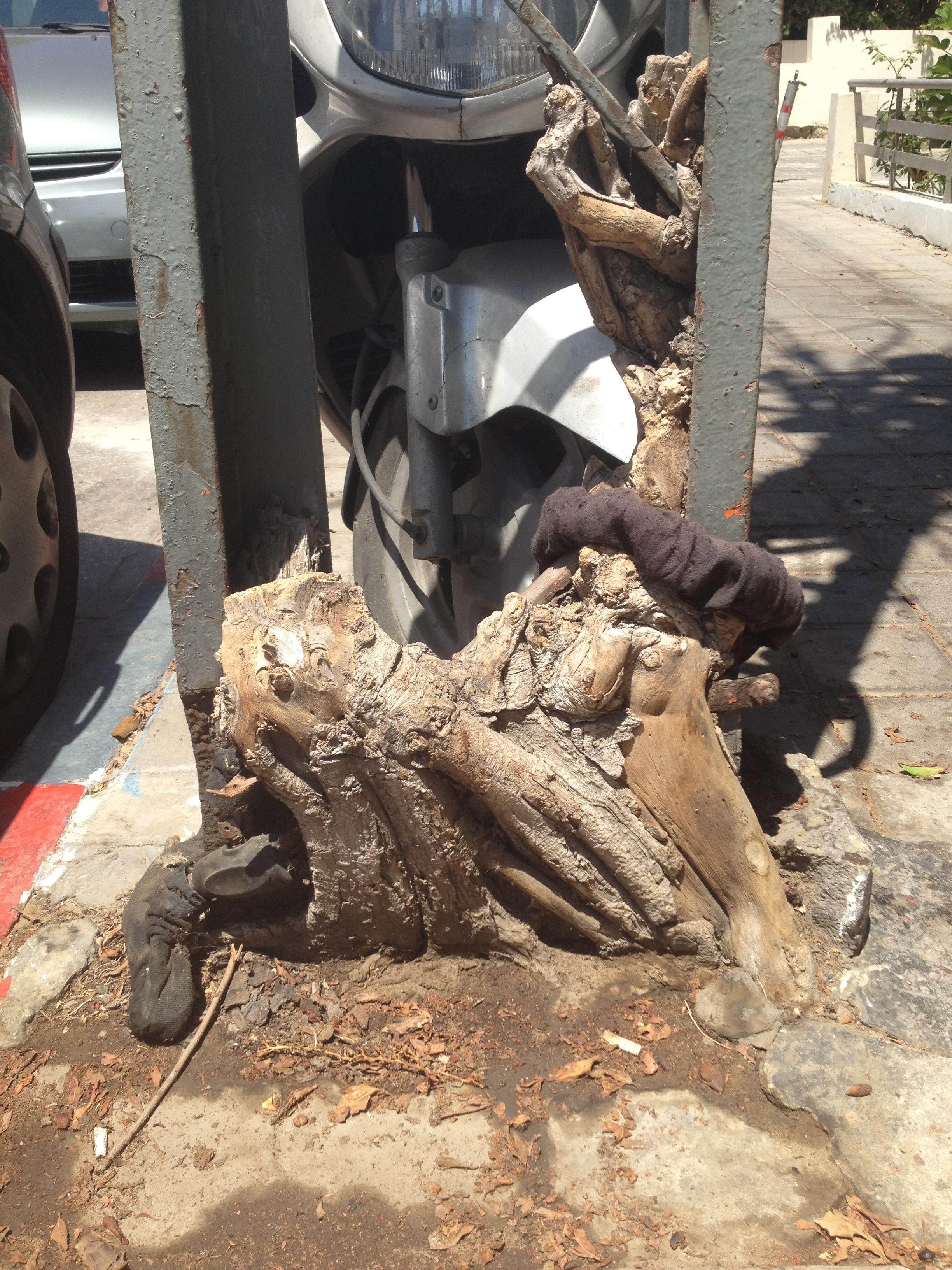 עץ עמוד ואופנוע