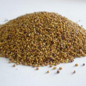 זרעי אלפלפא - זרעים להנבטה - אקו סטור
