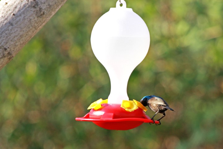 מתקן להאכלת צופיות - מתקן האכלה לציפורים- אקו סטור