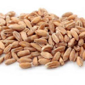 זרעי כוסמין להנבטה - אקו סטור
