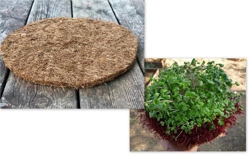 משטח הנבטה - הנבטת זרעים- הנבטה ביתית-הנבטת עדשים