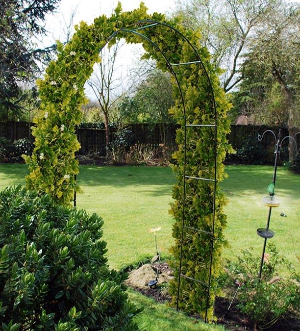 קשת/שער לצמחים מטפסים לגינה - רשת לצמחים מטפסים