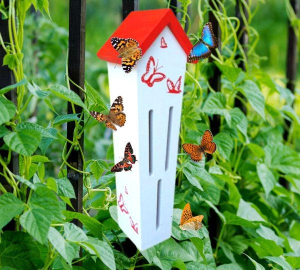 בית- חדש לפרפרים