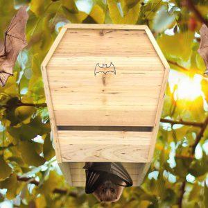 בית עטלפים